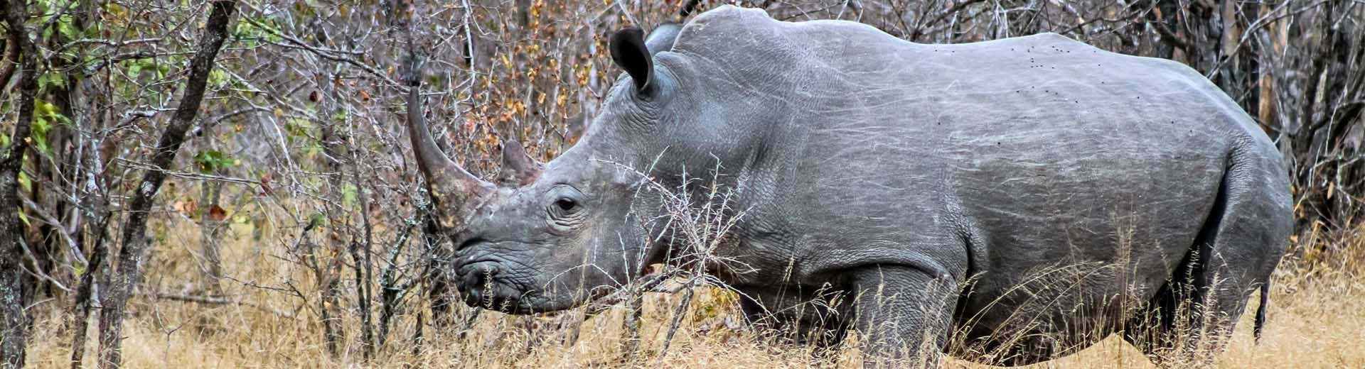 A rhino in the wild at Kruger National Park, South Africa (© Venessa Mathebula, age 15)